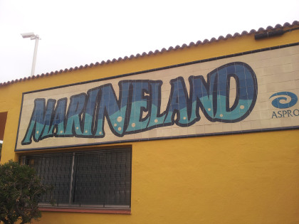 Marineland. Pavimento in situ